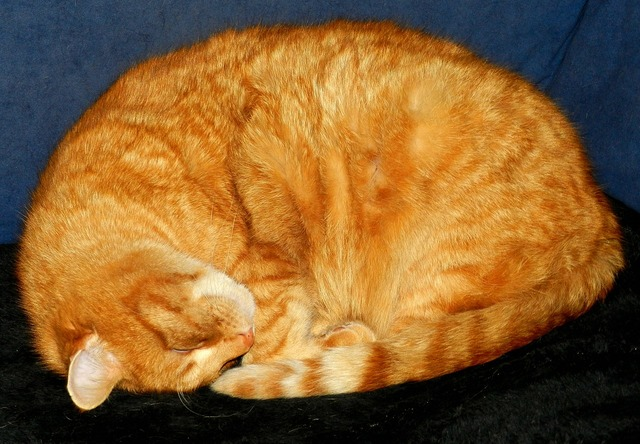 Cat sleep adidas, animals.
