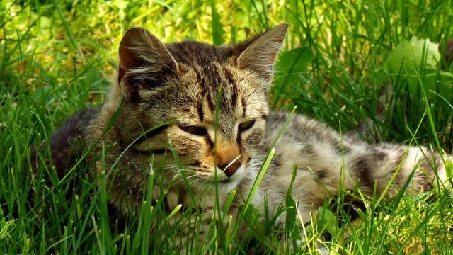 Cat sleep grass, animals.