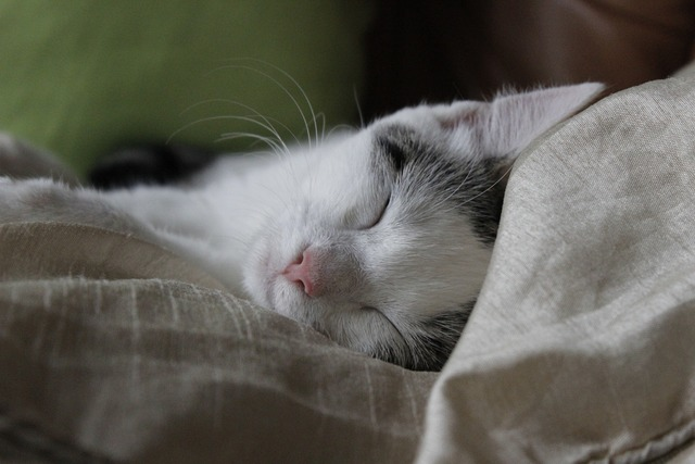Cat sleep happy, animals.