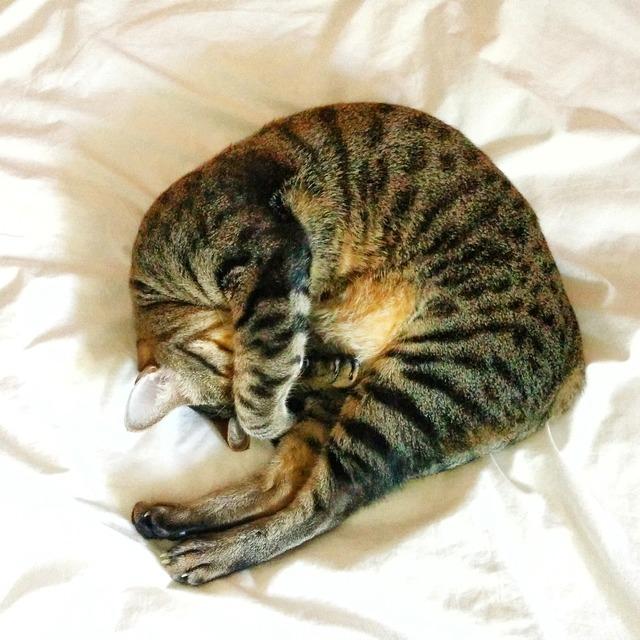 Cat sleeping cute, animals.