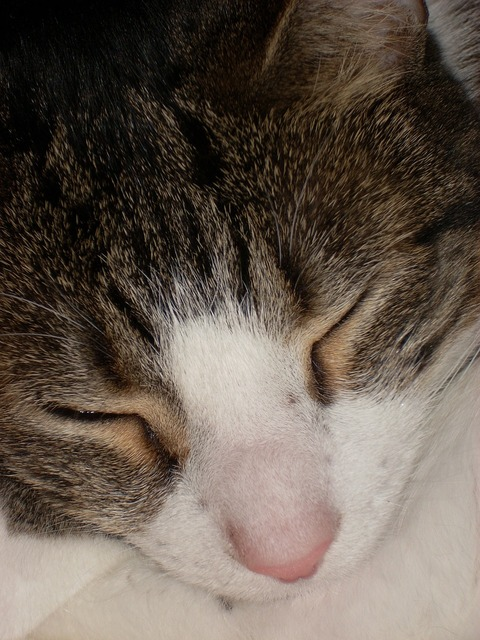 Cat sleeping feline, animals.