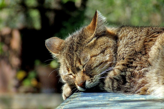 Cat sleeping garden, animals.