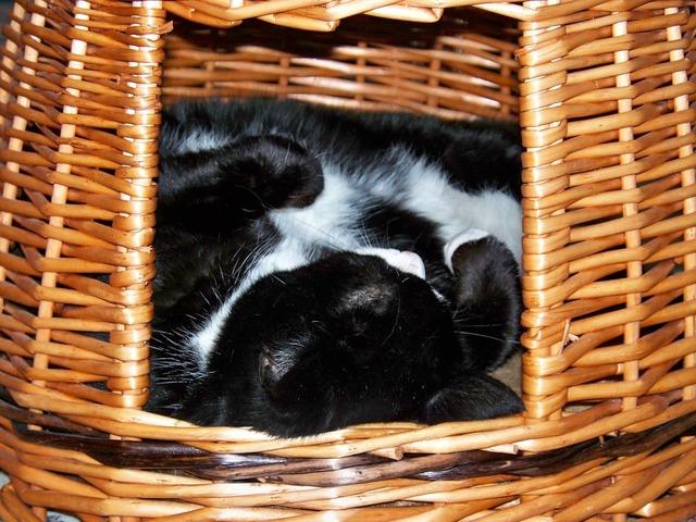 Cat sleeping hide, animals.
