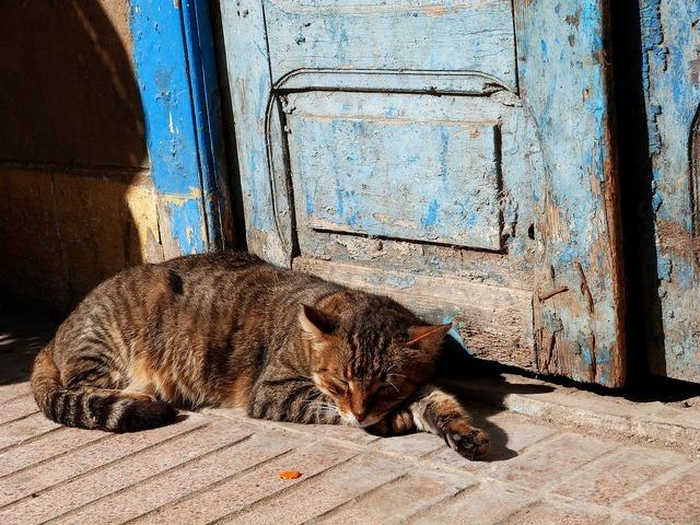 Cat sleeping outdoors, animals.
