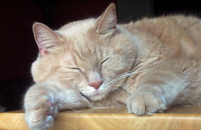 Cat sleeping sleep, animals.
