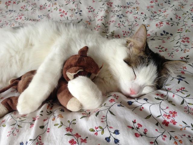 Cat sleeping stuffed toy, animals.