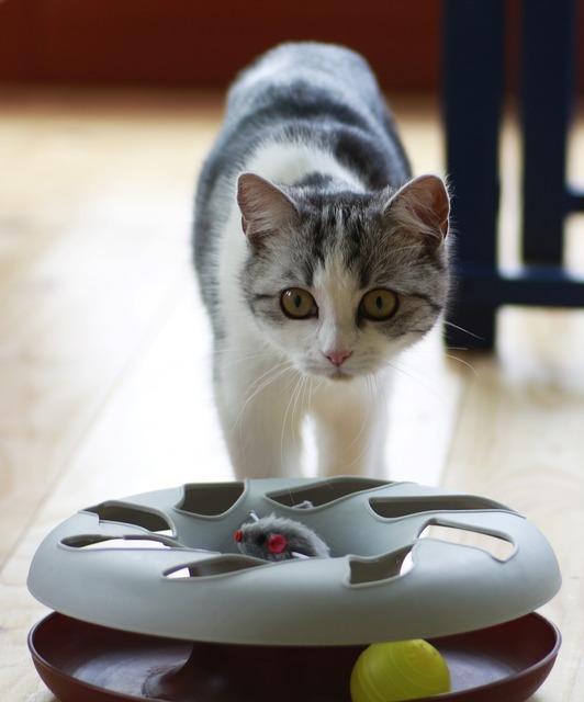 Cat small toys, animals.