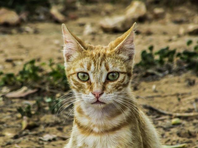Cat stray cute, animals.
