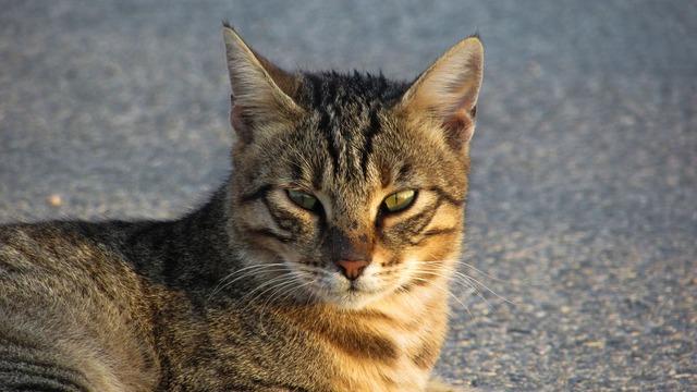 Cat stray eyes, animals.