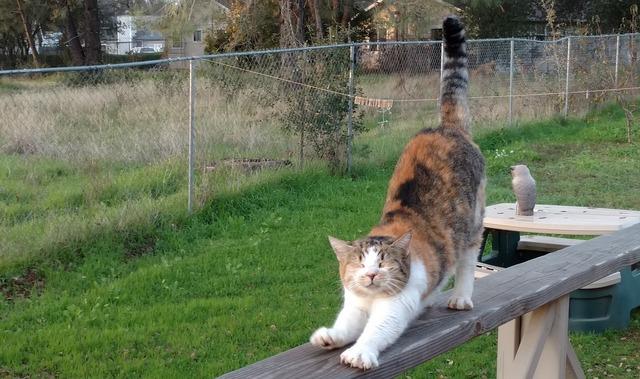 Cat stretch yoga, animals.