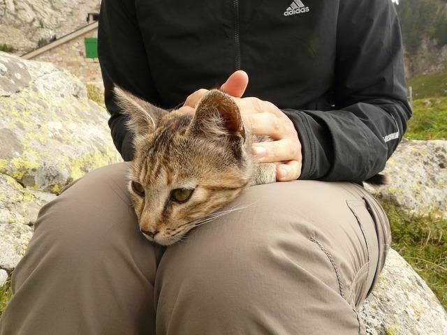 Cat stroke legs, animals.