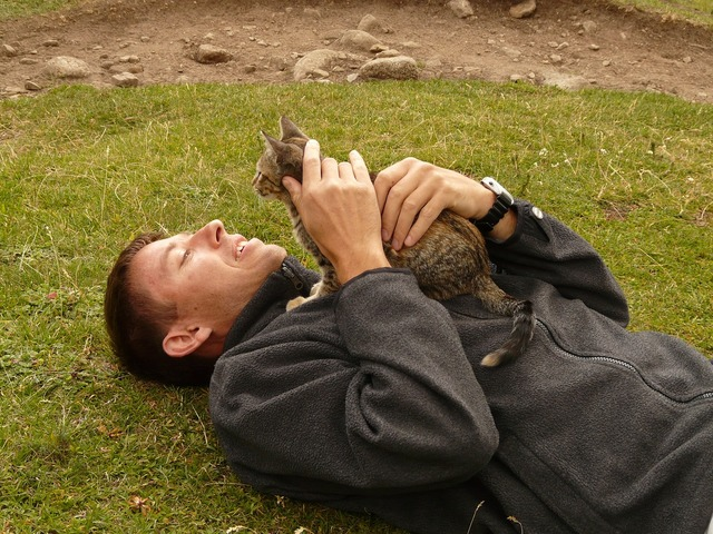 Cat stroke man, animals.