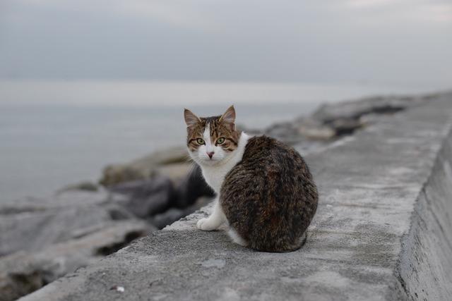 Cat suadiye beach, animals.