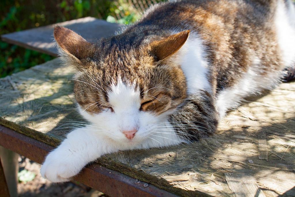 Cat summer village, animals.