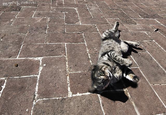 Cat sun feline, animals.