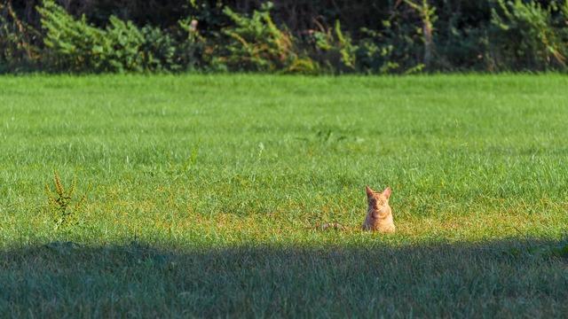 Cat sunshine caught, animals.