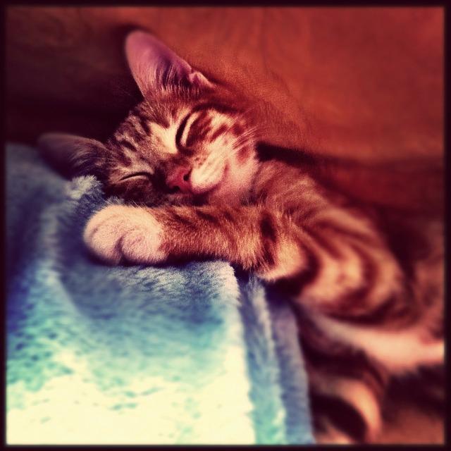 Cat sweet sleep, animals.