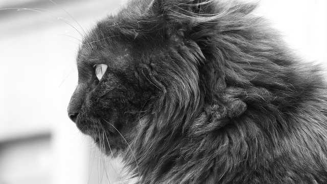 Cat they hair, animals.