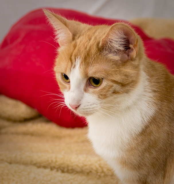 Cat think sweet, animals.