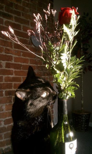 Cat vase rose, animals.