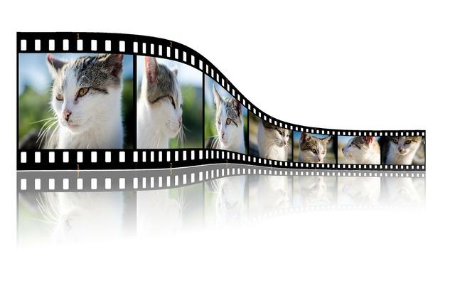 Cat video photo, animals.