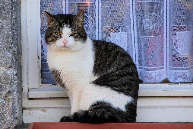 Cat view domestic cat, animals.