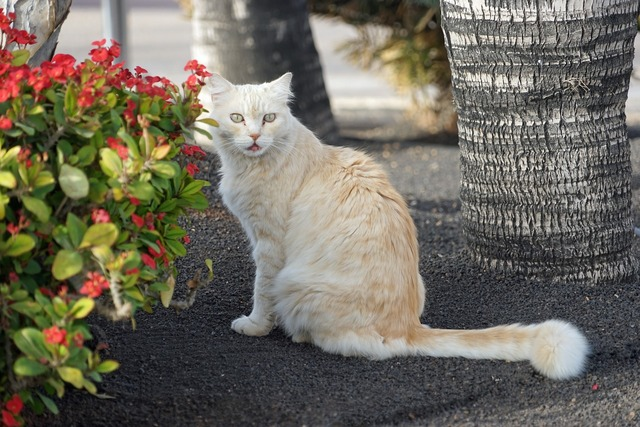 Cat view kitten, animals.