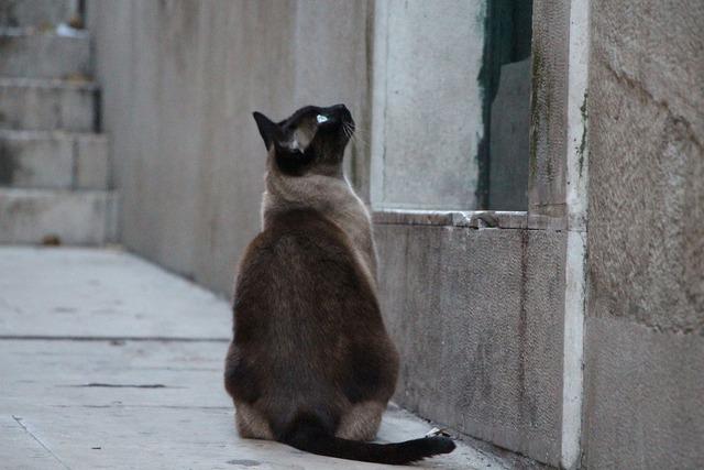 Cat waiting domestic cat, animals.