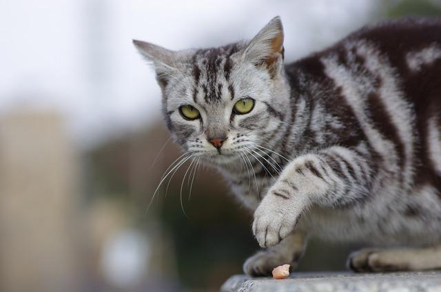 Cat walk animal portraits, animals.