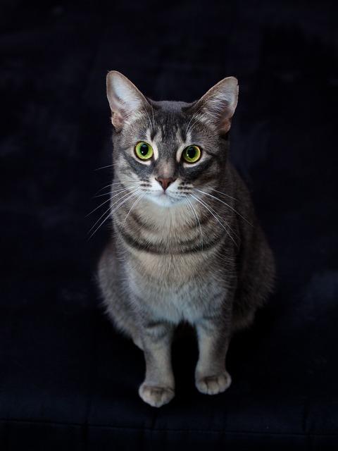 Cat watch view, animals.