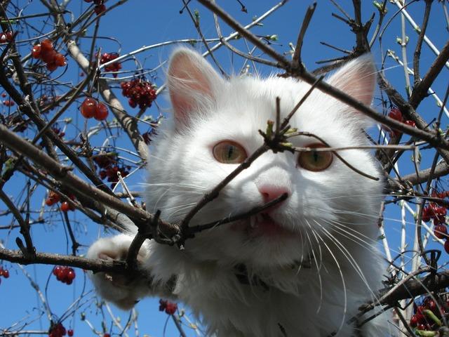 Cat white cat face, animals.