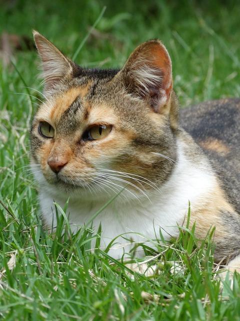 Cat wild feline, animals.