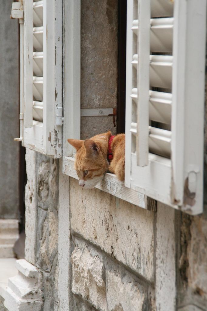 Cat window curiosity, animals.