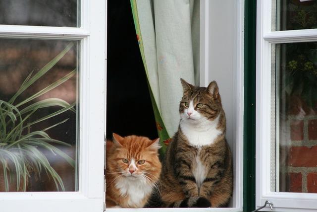 Cat window sit, animals.