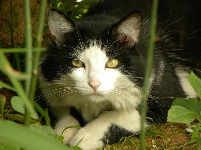 Cat yellow eyes eyes, animals.