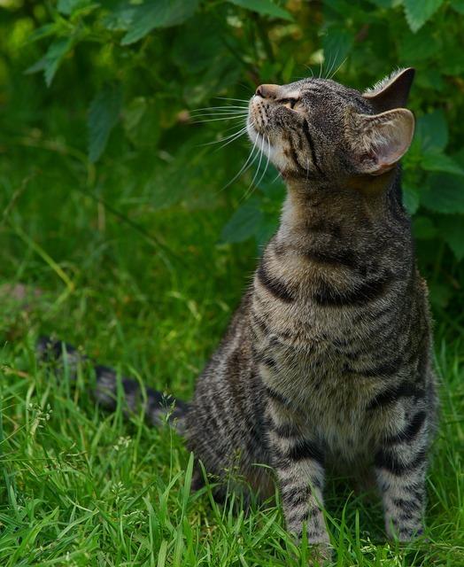 Cat young animal adidas, animals.