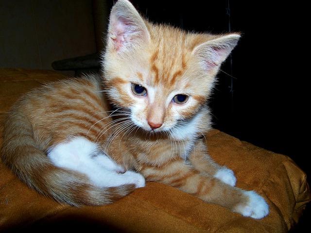Cat young cat playful, animals.