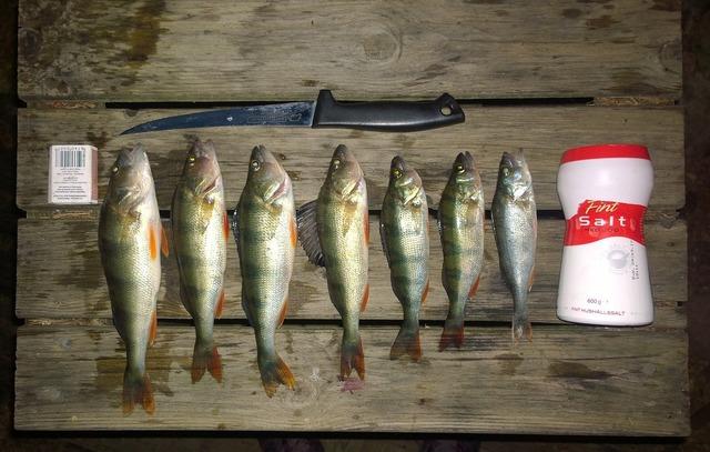 Catch fishing fish.