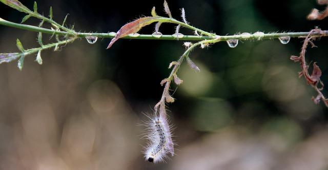 Caterpillar millipede plant, nature landscapes.