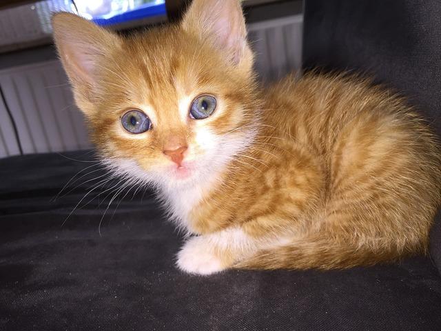 Cats cat kitten, animals.