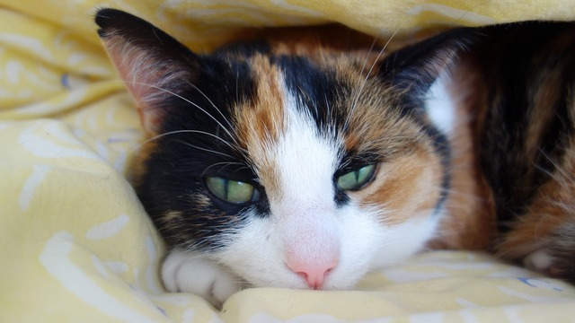 Cats cat sleep, animals.