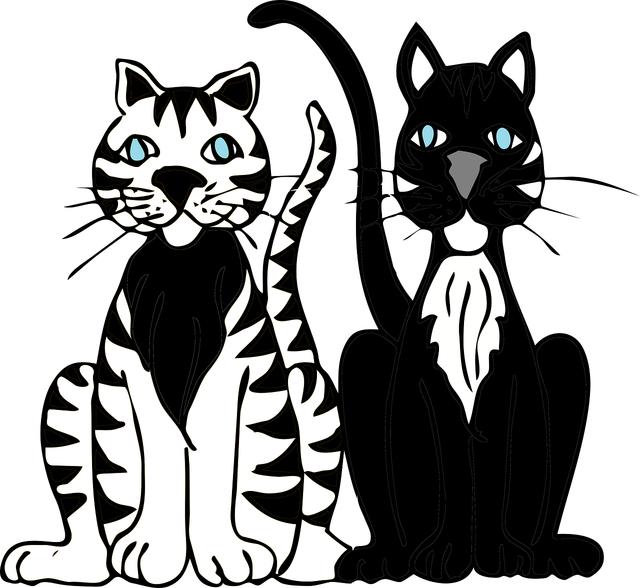 Cats kitty cat, animals.
