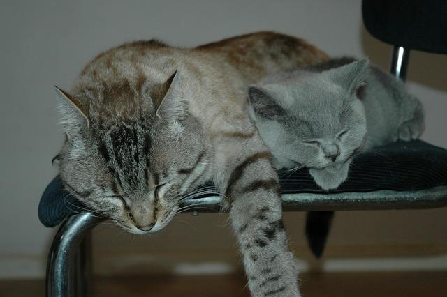 Cats pet animal, animals.
