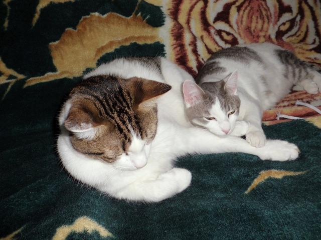Cats sleeping cuddle cuddling, animals.