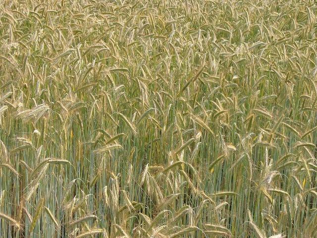 Cereals grain nutrition.