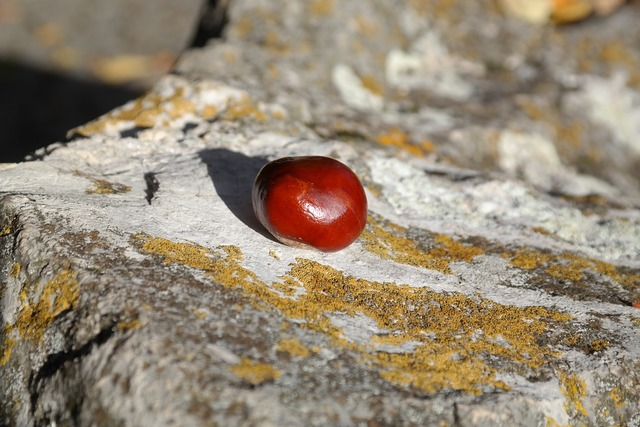 Chestnut nut forest fruit, nature landscapes.