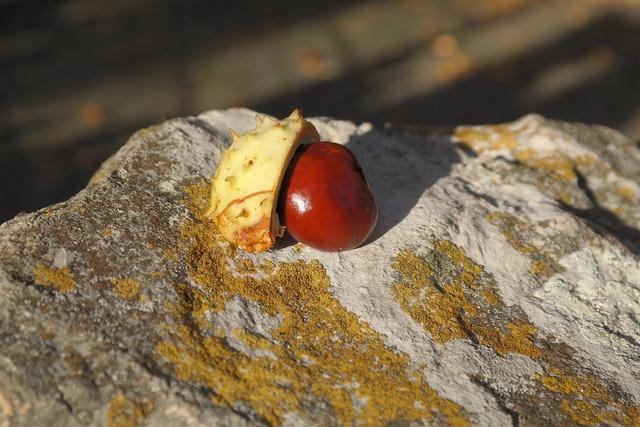 Chestnut sleeve shell, nature landscapes.