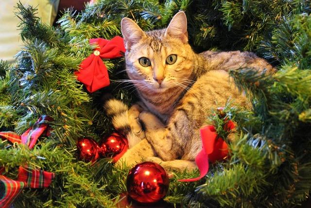 Christmas cat festive, animals.