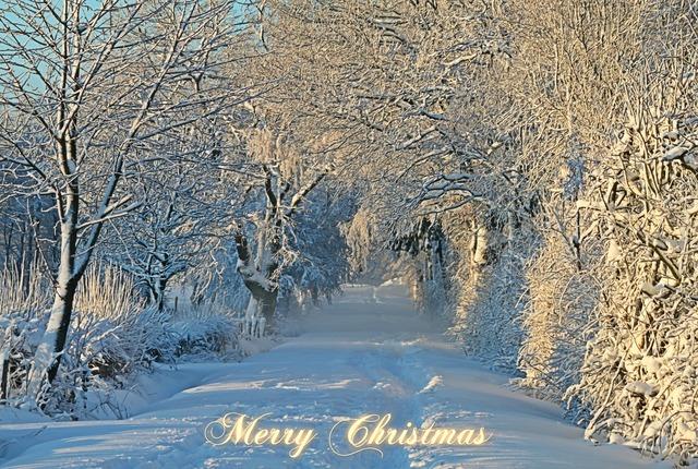 Christmas christmas card christmas greeting, nature landscapes.
