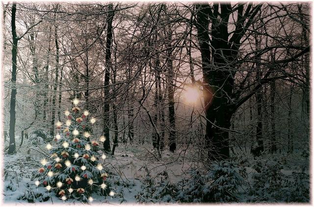 Christmas tree christmas sparkle, nature landscapes.
